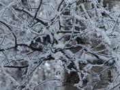 Frosty Jays