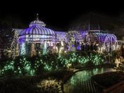 Christmas lights at Phipps.