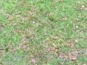 Golf-Ball-Sized Hail Sounded Like a Tornado
