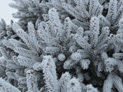 Christmas Day Hoar Frost