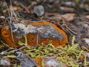 Outstanding Orange in December