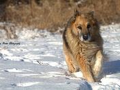 Thick Fur Coat