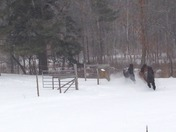 Horses running in first snowstorm