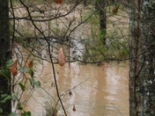 Brush Creek in Del Norte