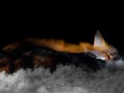 Fox on it's Bed of Lichen