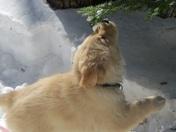 Puppy's first snow!