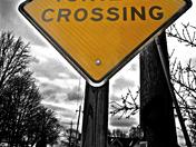 turtle crosswalk