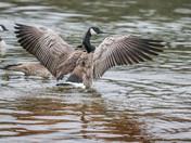 Goose Charm