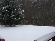3 inches of snow in Shoals in Southern Surry Co
