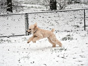 Big Russ and friends playing in snow