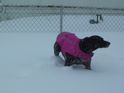 Our dog Roxy enjoying the snow day