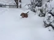 Watch How Dog Gets Through the Snow!