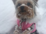 Lindyn's first snow!