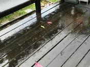 Raining!?!