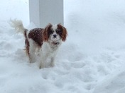 Casper's 1st snow