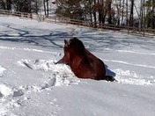 My horse loves the snow...