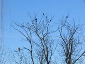 Blizzard Birds