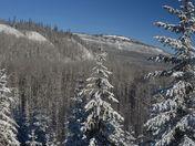 Fresh Snow on Mt Bergeron