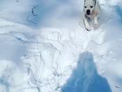 Doggies Loving this snow