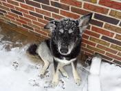Pup enjoying the snow