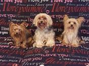 Bob,Cuddles,Brandi & Trixie