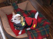 Sammy: dressed and waiting