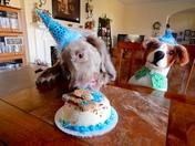Bentley's 4th Birthday!!!!