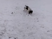 Lily loves snow.