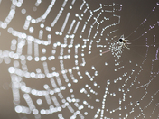 """""""Come in"""" said the Spider"""