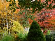 Autumn Yard