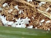 Amazing Snow Flakes