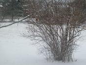 winter pic of unhappy robin