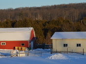 Sunset On The barns