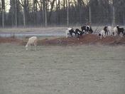 Happy Lambs at Mousavi Farm