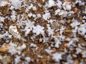 2/15/16 Snow