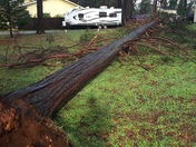 Tree down in storm