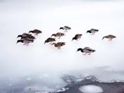 On ice.