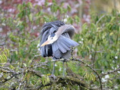 The Heron Twist.