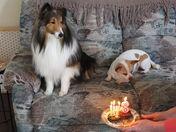Sammy and Angel's birthday celebration