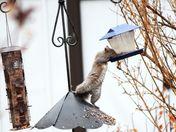 Squirrel gets a boost