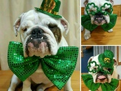Happy St. Patrick's Day EveryBully