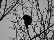 Good night Mr. Porcupine