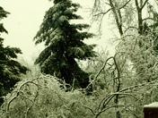 Toronto Ice Storm, 2013