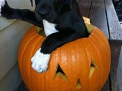 Sarge in a pumpkin