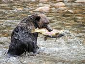 Great Bear Fishing