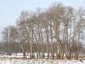 Elk Island in the snow
