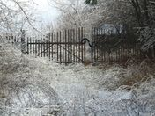 Icy grasses and fence