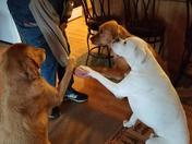 Hunter,Reiley and Diesel..