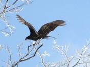 Giant Wings