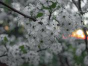 Spring Bilng